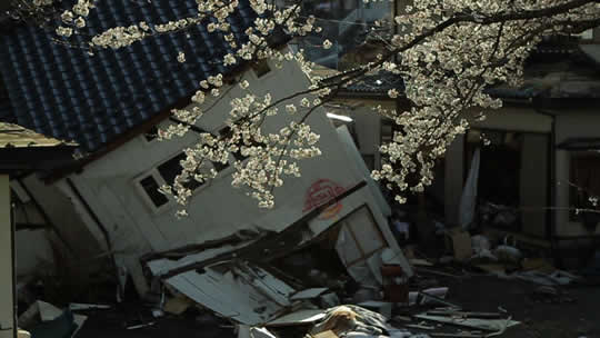 The Tsunami And The Cherry Blossom, nominated for the 2012